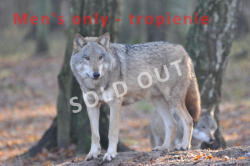 Men's Only - wolf tracking/tropienie wilków