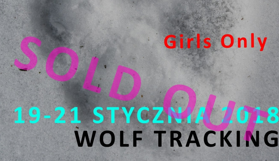 Girls only - wolf tracking